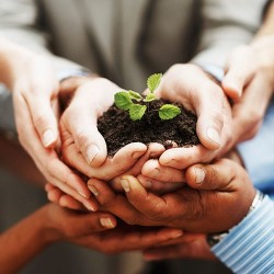 121198591_Business-growth-Hands-holding-plant-teamwork-500px